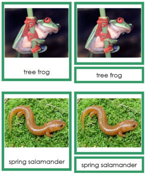 Vertebrates: Class Amphibia/Amphibians (color borders)