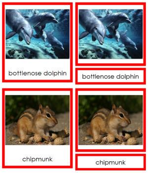Vertebrates: Class Mammalia/Mammals (color borders)