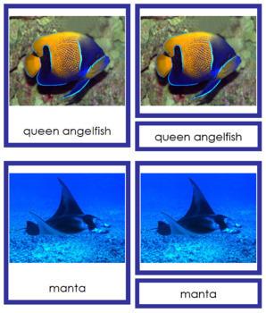 Vertebrates: Class Pisces/Fish (color borders)