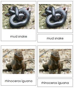 Vertebrates: Class Reptilia/Reptiles