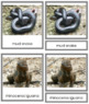 Vertebrates: Class Reptilia/Reptiles (color borders)