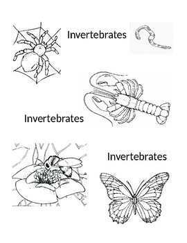 Vertebrates Invertebrates Coloring By Lauran Deibert Tpt