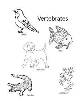 vertebrates invertebrates coloring by lauran deibert tpt. Black Bedroom Furniture Sets. Home Design Ideas