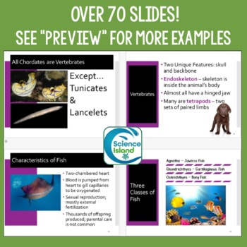 Vertebrates PowerPoint, Notes, and Video