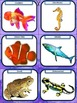 Vertebrates Sorting Cards Activity- Elementary Levels 1-5