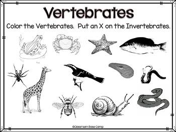 vertebrates and invertebrates unit by classroom base camp tpt. Black Bedroom Furniture Sets. Home Design Ideas