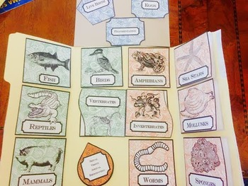 Vertebrates and Invertebrates Animals