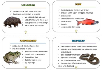 PDF Vertebrates and Invertebrates Animal Characteristics Cards Foldables Posters
