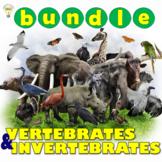 Classifying Animals: Vertebrates and Invertebrates No-Prep