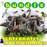 Classifying Animals: Vertebrates and Invertebrates Interac