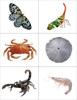 Vertebrates and Invertebrates Sort
