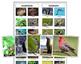 Vertebrates and Invertebrates: Sorting Cards