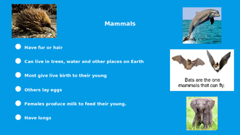 Vertebrates and Their Groups