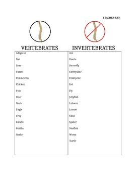 Vertebrates vs. Invertebrates Lesson, Foldable, Graphic Organizer!