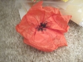 Veteran's Day Lesson - Book, Song & Tissue Paper Poppies!