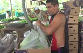 Video Banana Plantation Tour, Ecuador!