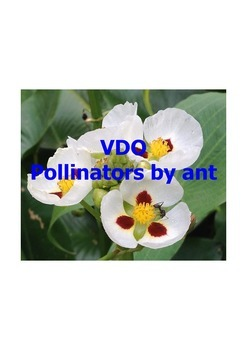Videos Pollinators by Ant