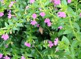 Videos Pollinators by Bee