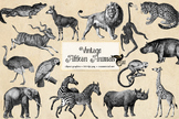 Vintage African Animals Clipart - Antique safari animal digital png illustration