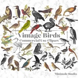 Vintage Bird Clipart, Antique Bird Illustrations, Big Bundle