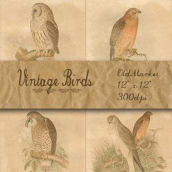 Vintage Birds Digital Paper Pack - Scientific Plates - 12 Papers - 12 x 12
