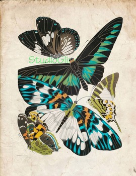 Vintage Butterfly Print: High Resolution Download, 5 Scientific Examples 1A