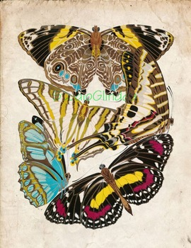 Vintage Butterfly Print: High Resolution Download, 5 Scientific Examples, 1B