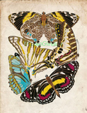 Vintage Butterfly Print: High Resolution Download, 5 Scien