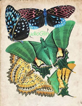 Vintage Butterfly Print: High Resolution Download, 5 Scientific Examples; 1C
