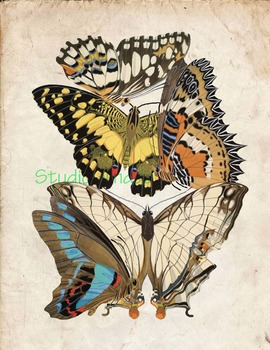 Vintage Butterfly Print: High Resolution Download, 5 Scientific Examples 1E