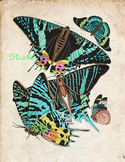 Vintage Butterfly Print, High Resolution  Download, 5 Scie