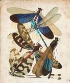 Vintage Dragonfly Print