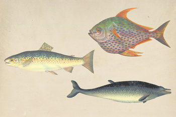 Vintage Fishes Clipart, Shabby Fishes, Scrapbook Pages, Old Vintage Style