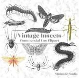 Vintage Insect Clipart, Spider, Centipede, Moth, Slug Illustrations