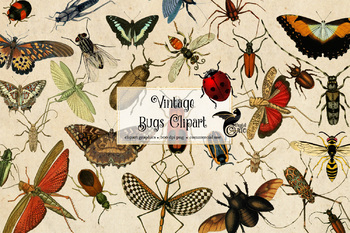 Vintage Insects clipart, antique bug illustrations in png format