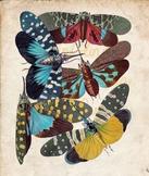 Vintage Moth Print