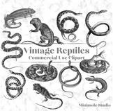 Vintage Reptile Illustration Clipart Bundle, Snakes, Lizard, Iguana, Chameleon