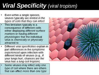 Viral Specificity and Human Lines of Defense Power Point Presentation