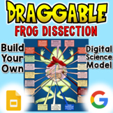 Virtual Frog Dissection - Digital Draggable Science Model