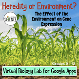 Virtual Biology Genetics Lab | Google Apps Distance Learning