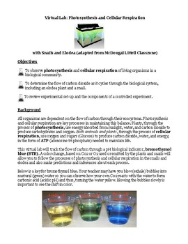 Virtual Lab/Webquest: Photosynthesis and Cellular Respiration with Snails/Elodea
