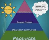 Virtual digital foldable organize energy Trophic level pyramid