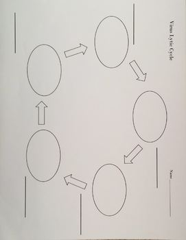Virus Reproductive Cycles