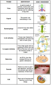 Virus and Cell Vocabulary