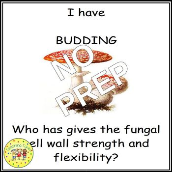 Viruses Bacteria Protists Fungi Biology I Have, Who Has Games