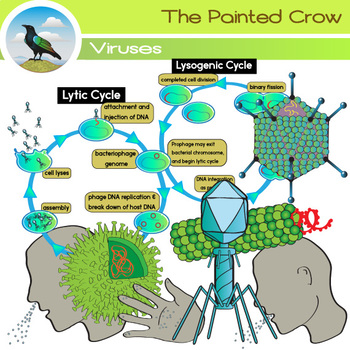Viruses Clip Art - Lytic and Lysogenic Cycle