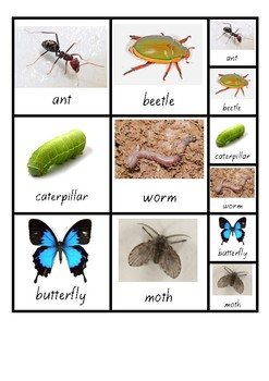 Visual Aid Photo Cards (PECS) - Insects