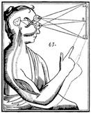 Visual Perception worksheets