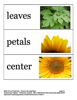 Visual Vocabulary Cards- Growing Plants