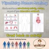 Visualizing Human Anatomy